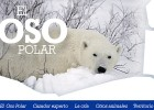 El oso polar | Recurso educativo 107241