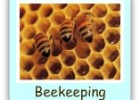 Bees Are Amazing! | Recurso educativo 676282