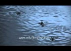 Walking on water! | Recurso educativo 765486