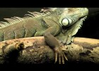 Vertebrates vs. Invertebrates! | Recurso educativo 768662