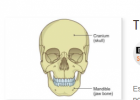 The skeleton: bones and joints | Recurso educativo 769313