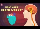 How Your Brain Works? | Recurso educativo 772938