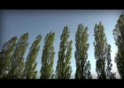 Strong Wind Blowing Through Trees | Recurso educativo 776836